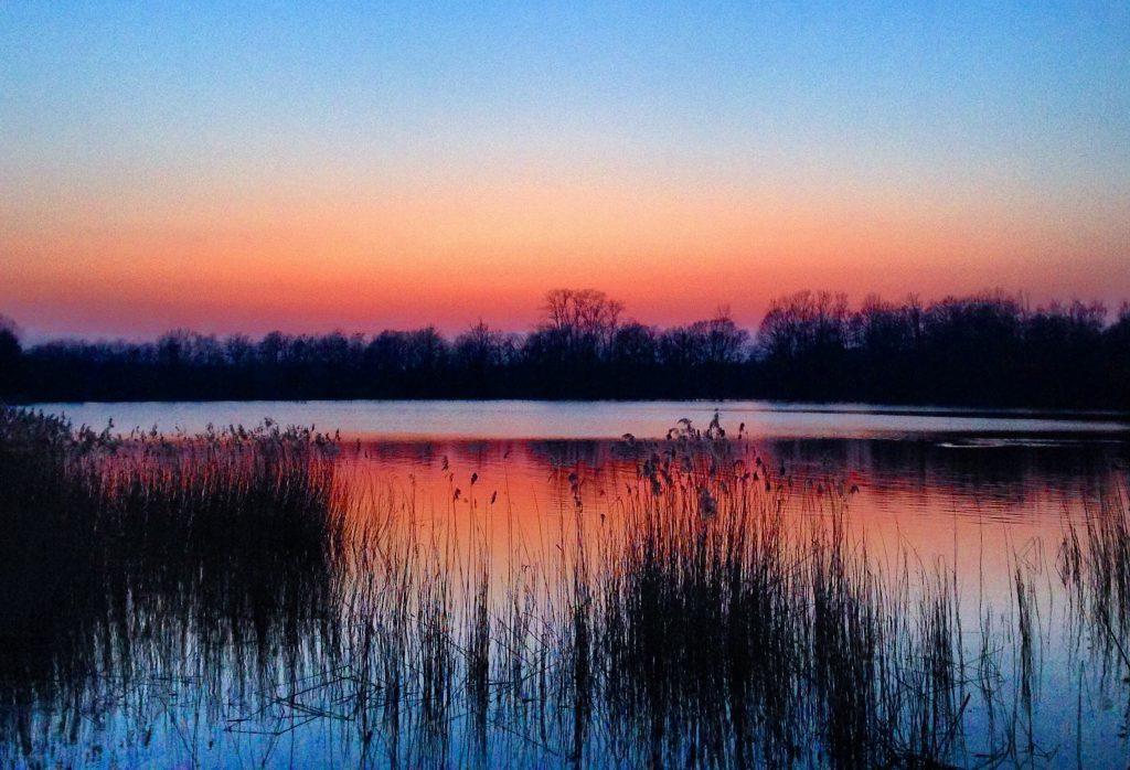 Platwijers Zonhoven Limburg
