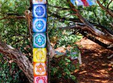 7 Chakra's afgebeeld op een boom