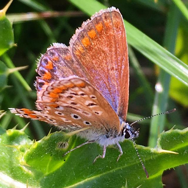 Verandering vlinder