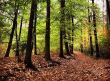 Loslaten in de herfst